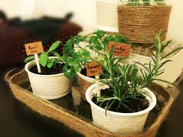 Small Picture Garden Design Garden Design with Mini Indoor Herb Garden with