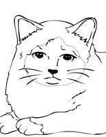 Small Picture Cats Coloring Pages Handipoints