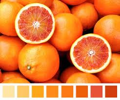 monochromatic green photo Monochromatic pink photo monochromatic orange  photo . What does Monochromatic mean?
