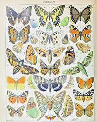 Details About Vintage Butterfly Insect Entomology Chart Painting 8x10 Real Canvas Art Print