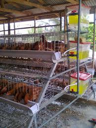 Poultry Farm Design Broiler House Plans South Africa Poultry Farm Design Pdf