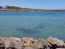 Awesome For Families And Kids Review Of Sebastian Inlet