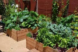 Small Picture Awesome Great Small Backyard Vegetable Garden Ideas Vegetable
