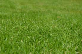 find articles and ideas for toronto lawn care expert tips eieihome