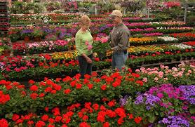 washington dc s best lawn and garden resources merrifield