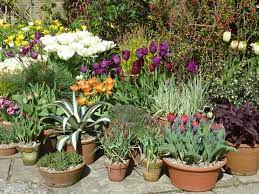 pots and planters the enduring gardener