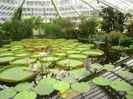 file national botanic garden of belgium meise img 4379 jpg