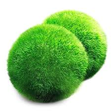 Decorative Moss Balls Canada