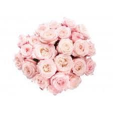 garden rose bouquet. Brilliant Rose Light Pink And Red Garden Rose Bouquet Intended B