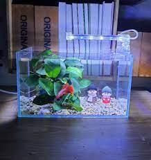 Set bể cá mini dài 24 cm với 5 món - bể, sỏi nền, cây, đèn led, phụ kiện OB  lão, giá tốt nhất 230,000đ! Mua nhanh tay!