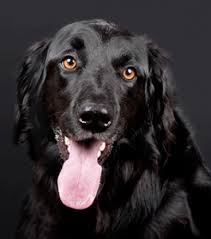 What Is A Hip And Elbow Score In Dogs Goddard Veterinary