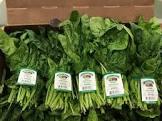 california spinach