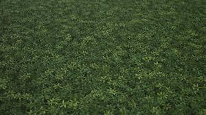 Seamless Grass Texture Game An Error Occurred Seamless Grass
