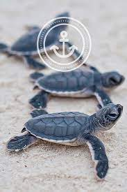 Tumblr Wallpapers Sea Turtles (Page 1 ...