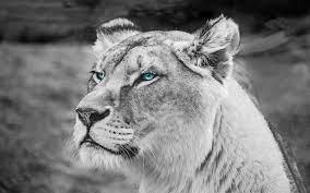 wildlife, africa 4k ultra hd 16:10 hd ...