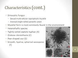 mycelial form histoplasma capsulatum and histoplasmosis ppt video online download
