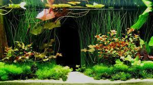 Aquarium Background Poster Hd ...