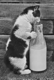 Kitten with a <b>bottle</b> of <b>milk</b> / <b>Dogs</b> and <b>cats</b> / Postcards / Postallove ...