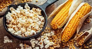 Growing Popcorn Growing Popcorn Its Easier Than You Think Farmers Almanac