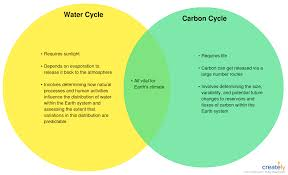 Diagram Venn Ppt Water Vs Carbon Cycle You Can Edit This Template And