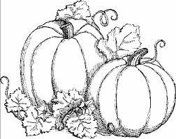 pumpkin drawing. pumpkins adults and teens coloring pages pumpkin drawing