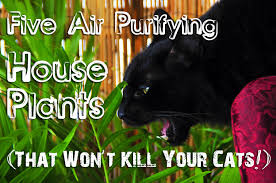 Five Air Purifying House Plants That Won't Kill Your Cat  Domestic Geek  Girl