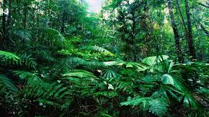 tropical rainforest wallpaper 990284