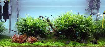 So Wachsen Wasserpflanzen U2013 Aquarium Licht