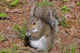 grey squirrel house plans elegant world
