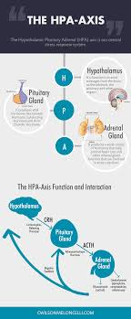 The Hpa Axis And Stress Hypothalamus Pituitary Adrenal Axis Flow