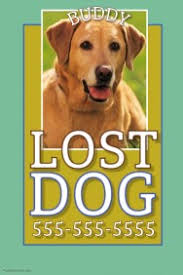 Lost Pet Flyer Maker Customizable Design Templates for Lost Animal PosterMyWall 36