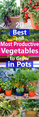 container garden vegetables. Growing Vegetables In Containers Is Possible But There Are Some That Grow Easily And Produce Heavily Container Garden D