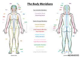 Meridian System Chart Female Body With Principal And