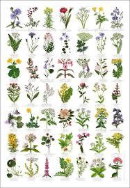 British Wild Flowers Identification Chart Nature Poster