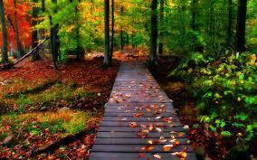 HD Autumn Wallpaper [2560x1600 ...