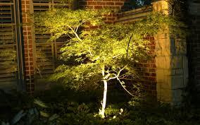 tree lighting ideas. Tree Lighting Ideas E