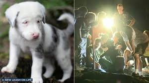 Image result for Deaf Puppy Toffee Rescued From 50-Feet Hole