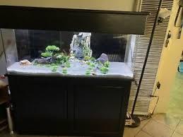 75 gal aquariums tanks in