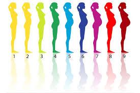Diagram Of 6 Months Pregnant Wiring Diagram Mega