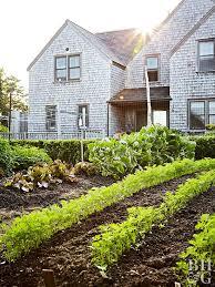 vegetable garden next to house