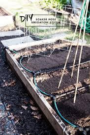 garden soaker hose. DIY Soaker House Irrigation System | For Raised Bed Gardens Garden Hose