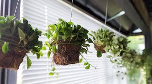 Zimmerpflanzen An Der Wand Aufhängen Jumbo Youdoo