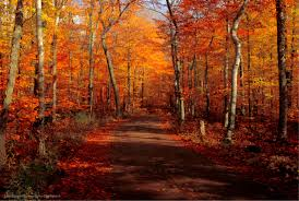 The Best Places to See the Most Beautiful Door County Fall Colors