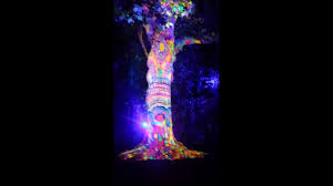 Liberty Light Show Bayeux Tree Of Liberty Light Show San Francisco Youtube