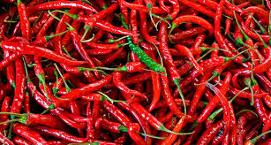 chili peppers.  Peppers Chili Peppers For Chili Peppers S