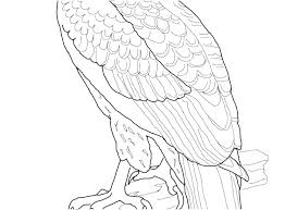 Eagles Coloring Pages Bald Eagle Coloring Pages Eagles Coloring