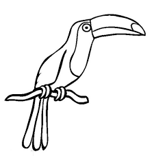 Small Picture toucan drawing drawing of a toucan coloring page coloring sun free