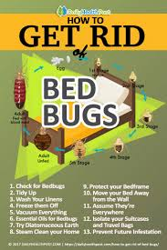 How To Get Rid Of Bed Bugs: 13 Effective Chemical-Free Tricks