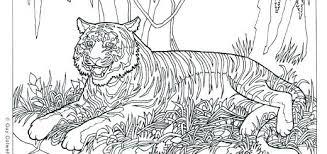 Coloring Pages Zebra Rollingmotorsinfo