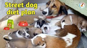 Street Dog Diet Plan Diet Chart In Hindi Street Dog